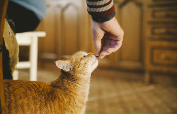 cute cuddly red cat being fed ; Shutterstock ID 181241915; PO: U3486 ; Job: Friskies Cat-Chow content adaptation